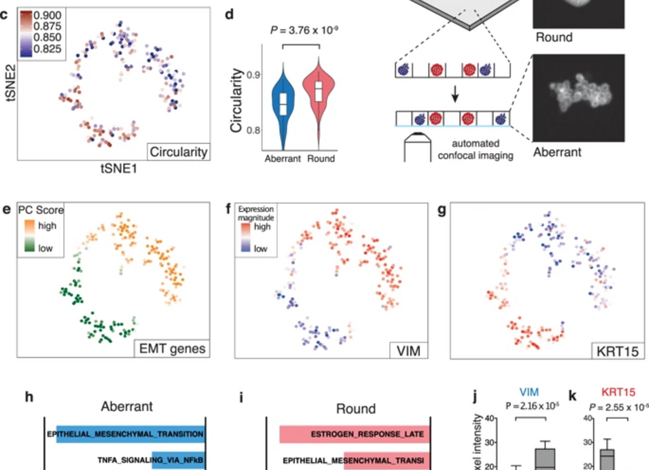 Pheno-seq: Linking visual features and gene expression -